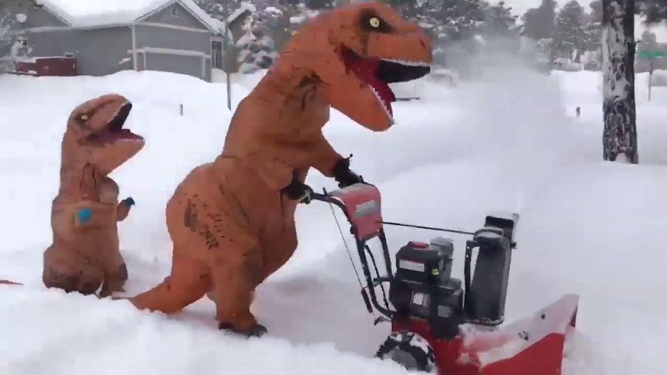 Crazy! Wenn zwei Dinosaurier sich im Schnee austoben!