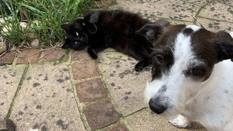 Dicke Freunde: Katze holt Hund zum Spielen ab