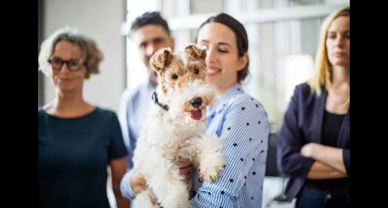 5 Gründe, warum Sie Ihren Hund mit zur Arbeit nehmen sollten