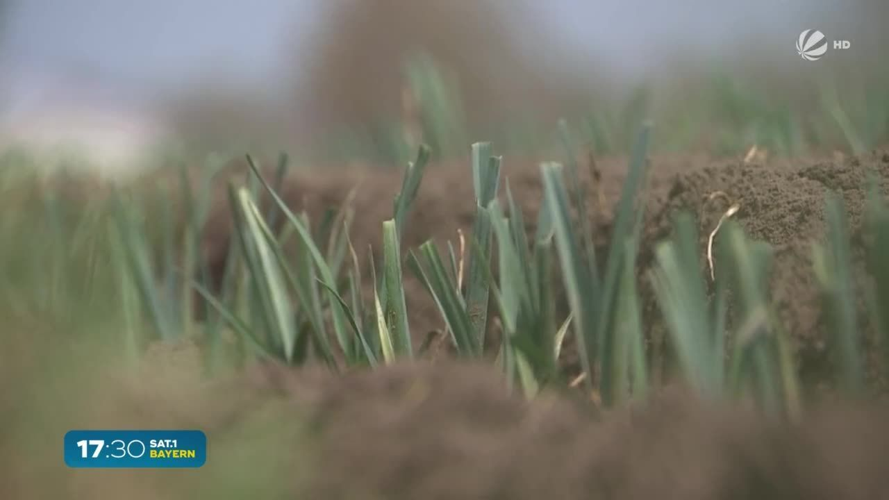 Da schau her – Mehr Wissen über Bayern: Gemüse-Anbau im Freistaat